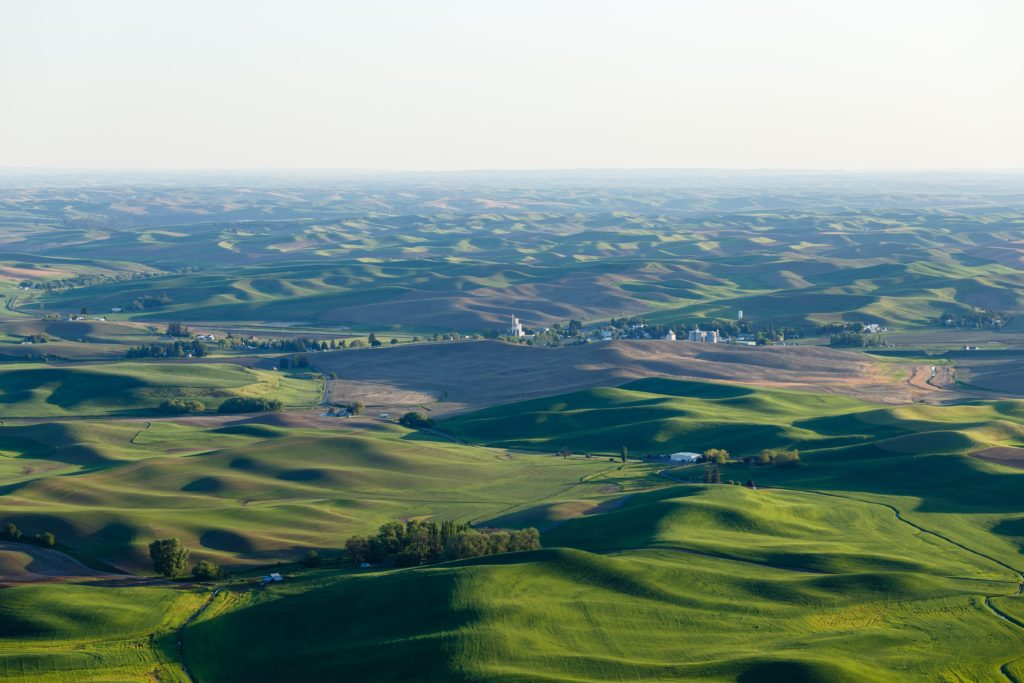 View of Palouse Hills from Steptoe butte State Park, Garfield, WA