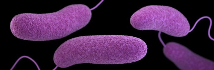 This illustration depicts a three-dimensional (3D), computer-generated image of a number of oblong-shaped, Vibrio parahaemolyticus bacteria.